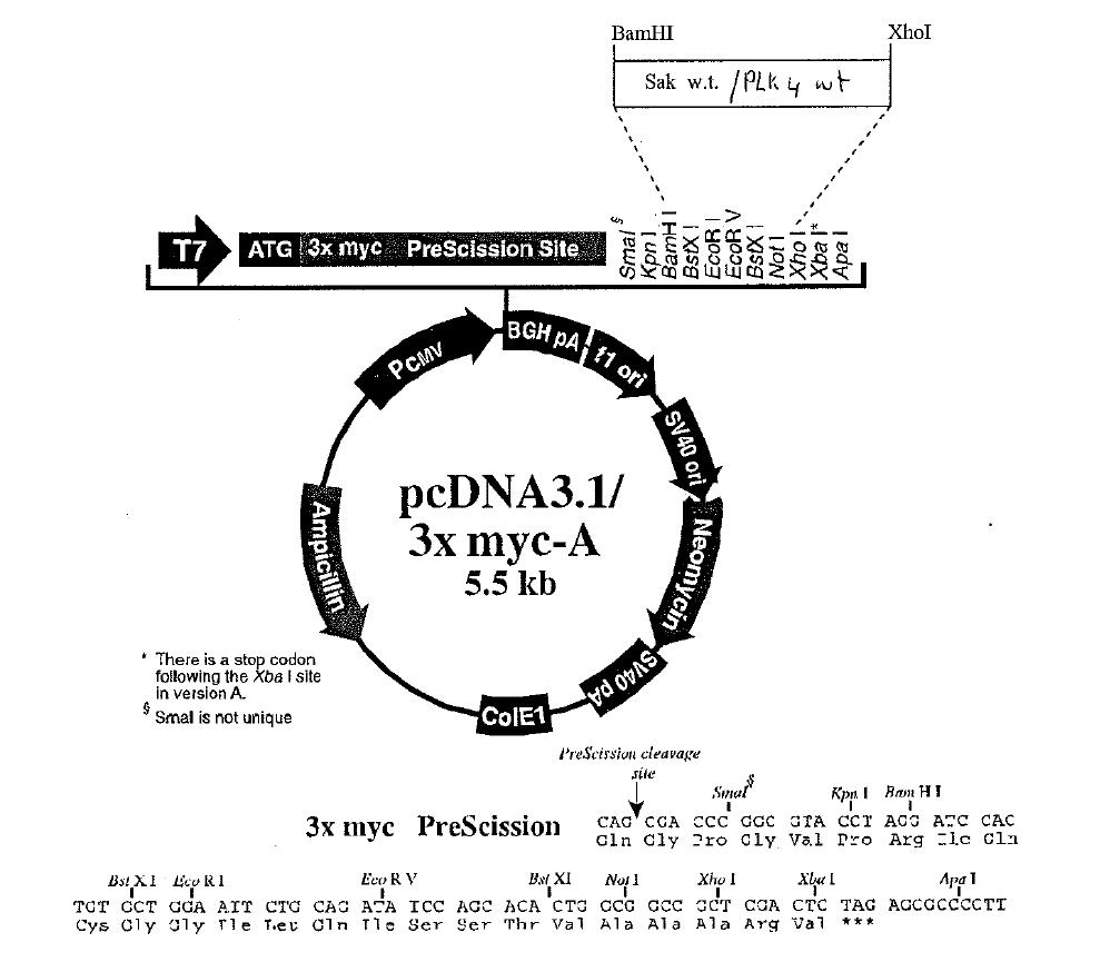 download handbook of parkinsons disease