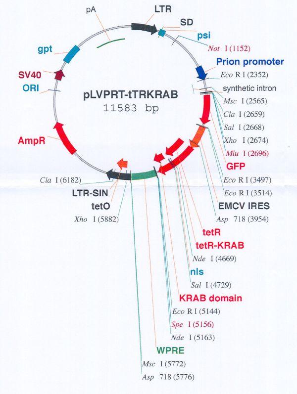 doxycycline hyclate and tretinoin.jpg