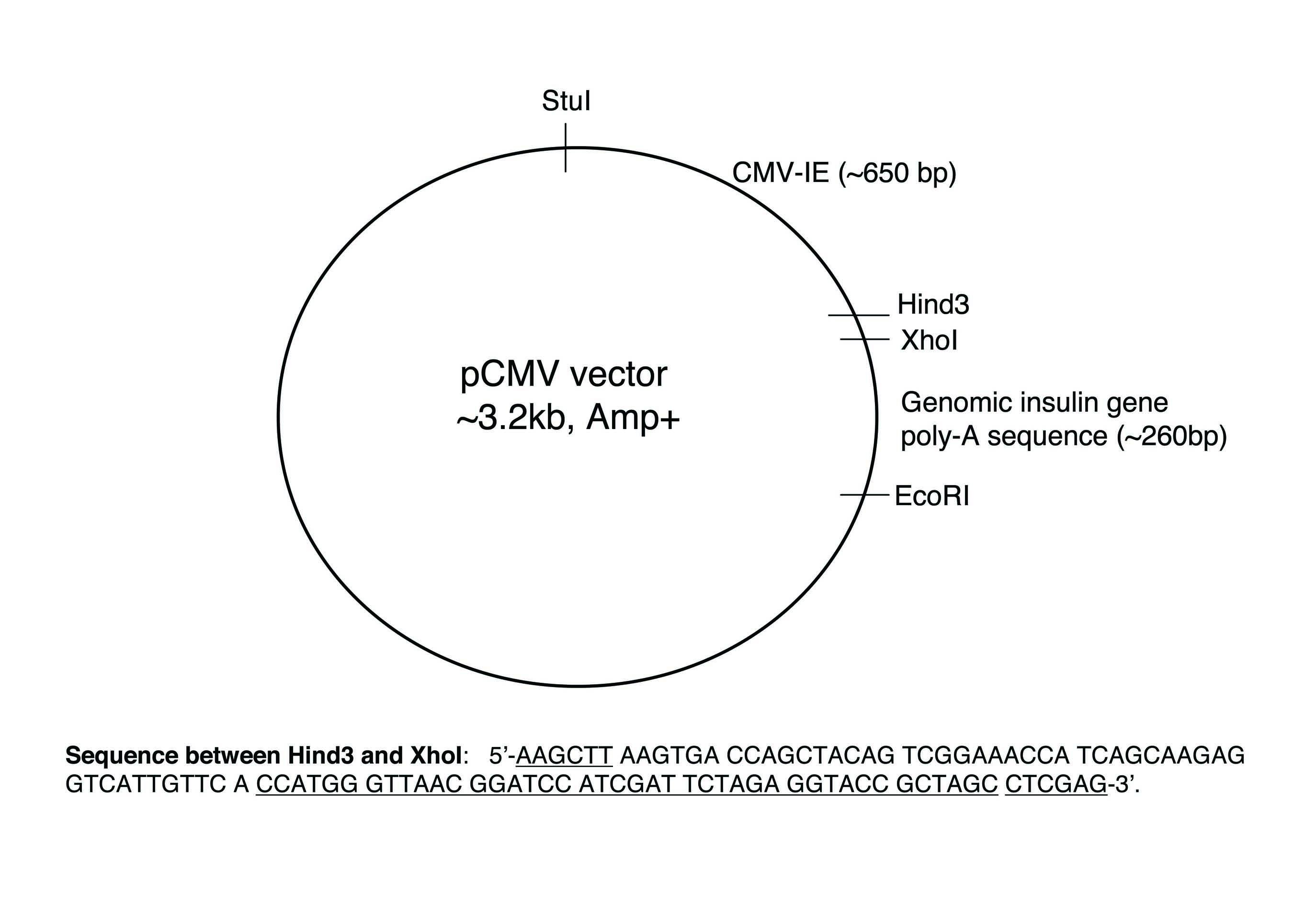 Addgene Pcmv Mir30