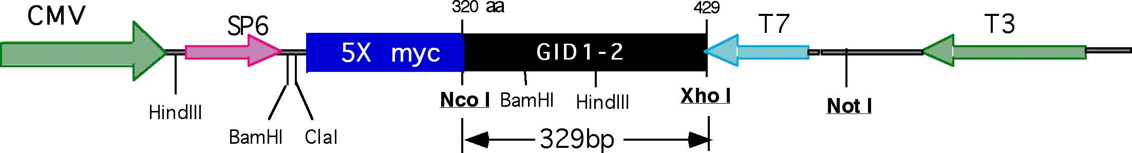 Addgene: Axin GID 1-2/pCS2MT