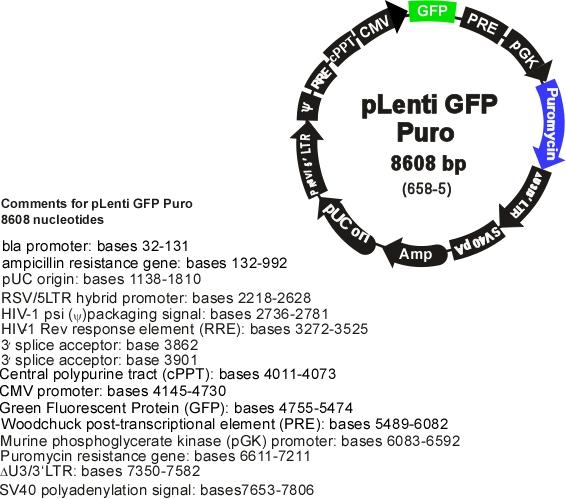 addgene  plenti cmv gfp puro  658
