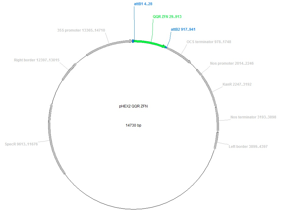 map of plasmid with 44463 on 20670 besides 31527 likewise Vectortable furthermore 154516 in addition 51.
