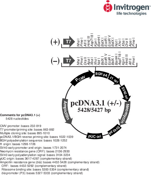 Pcdna3 1 Map Addgene: alpha 0 CFP in pcDNA3.1
