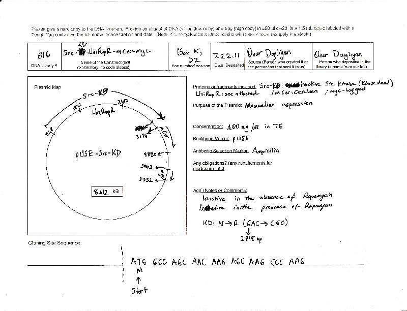 Addgene: pUSE-Src-KD-UniRapR-mCerulean-myc