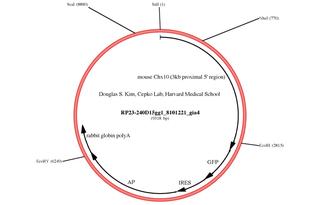 Addgene: Chx10 (3kb proximal 5' region)-GFP-IRES-AP