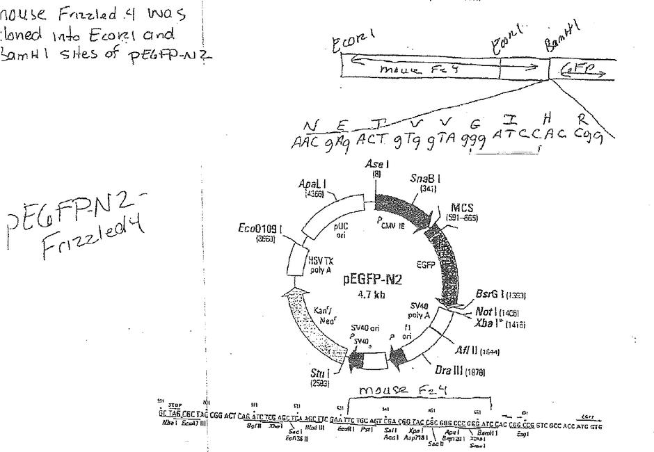 Prk5 vector map