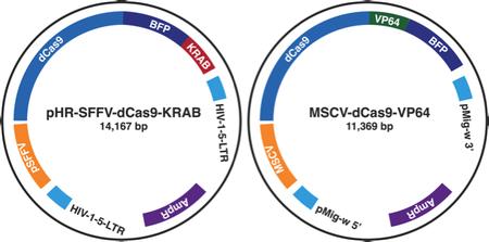 CRISPR plasmid maps