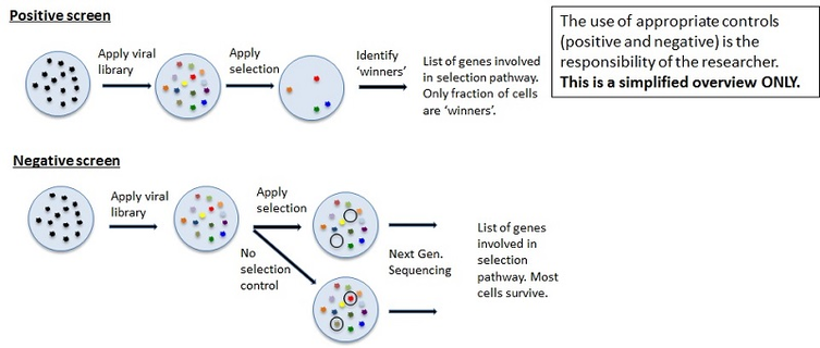 Addgene: Guide to Using Pooled Libraries