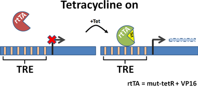 tetracycline on system