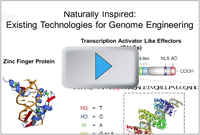 Genome Engineering - Existing Technologies video