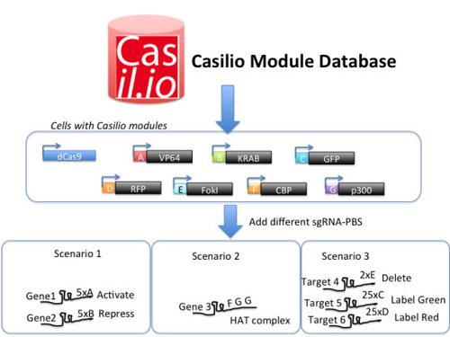 casilio system diagram showing progression from database to module design