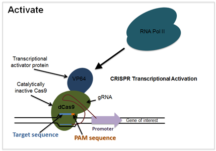 Mis-Expressing Insect Genes Using Cas9 : IGTRCN