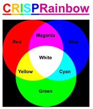 CRISPR Rainbow color diagram