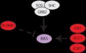 ras pathway icon