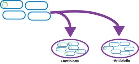 bacteria antibiotic resistance cartoon