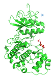 ERK2-phosphorylated_2_1.png