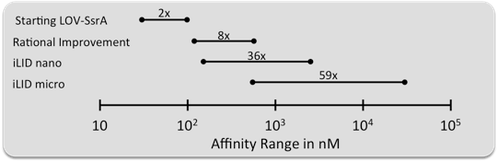 Graph comparison of affinities of photoswitchable dimers