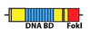 DNA-BD-Fok1.jpg