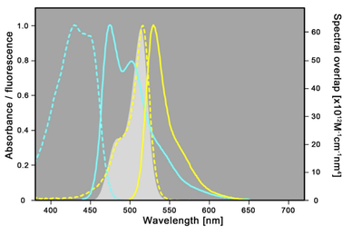 Spectral properties of mTRQ2 and mVenus