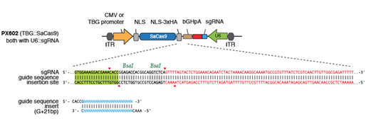 px602 plasmid map