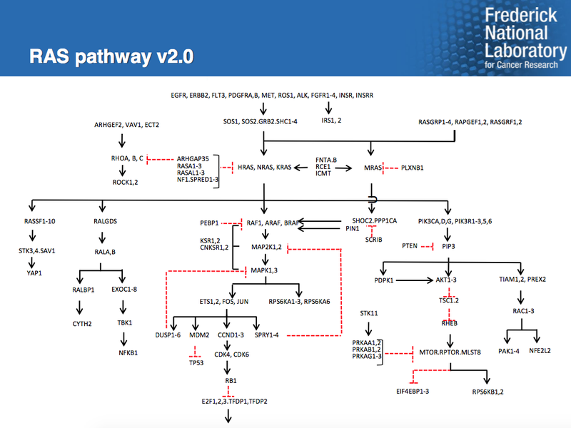 Schematic of the RAS pathway