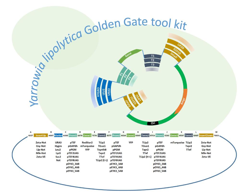 YL goldengate tool kit.jpg