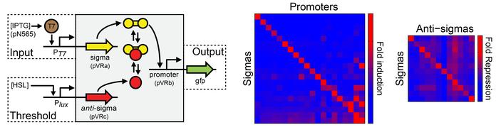 Voigt Lab Repressors for Orthogonal Logic Gates