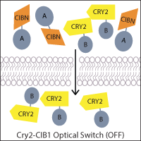 Optical Switch example