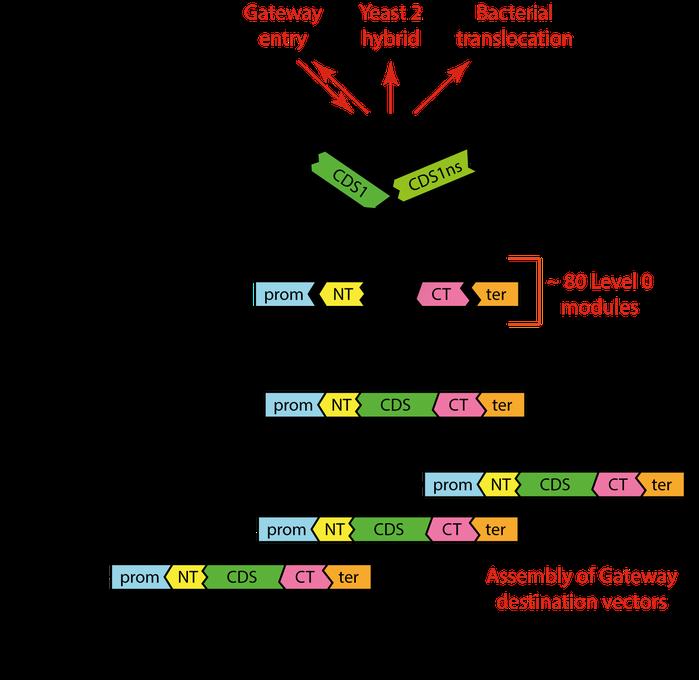 Addgene_MoClo-Toolkit-scheme.png