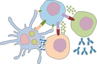 adaptive-immunity.png