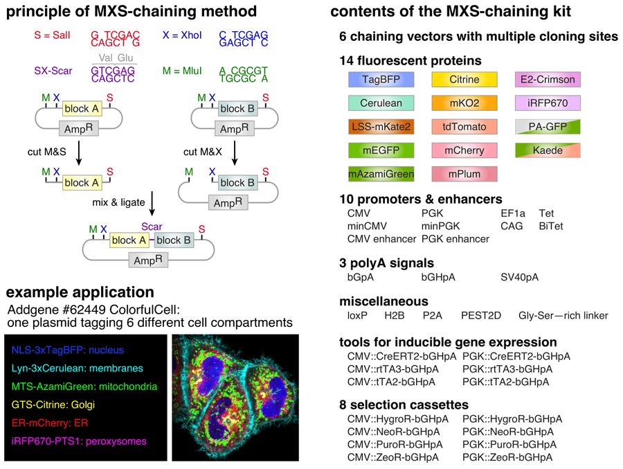 Overview of MXS Chaining procedure