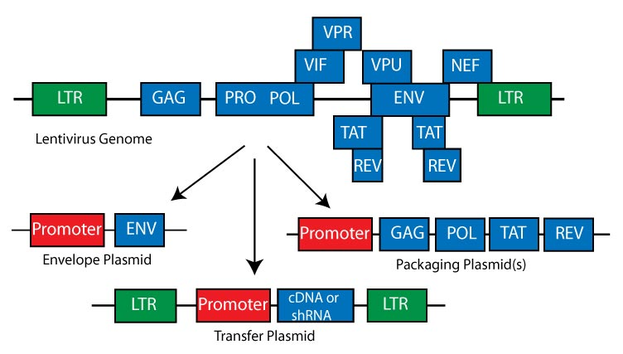 Addgene Lentiviral Packaging Plasmids