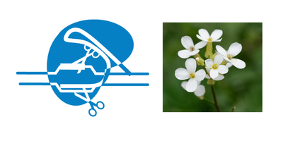 CRISPR with Arabidopsis