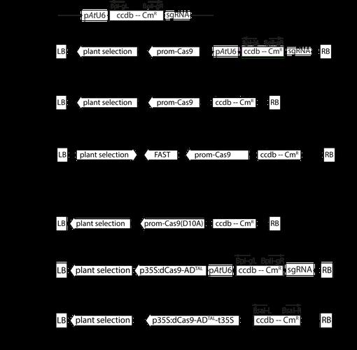 plasmid summary scheme