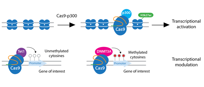 CRISPR epigenetics schematic