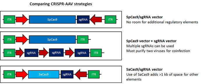 diagram of AAV CRISPR plasmid strategies