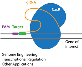 crispr recognition tool