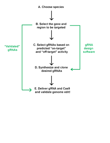 grna design process diagram
