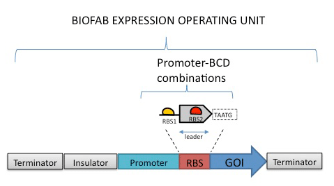 biofab figure.png