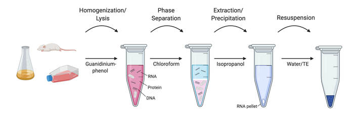 A diagram of the different steps in RNA extraction.