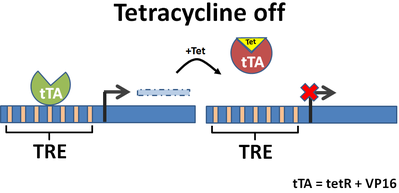 tetracycline off system