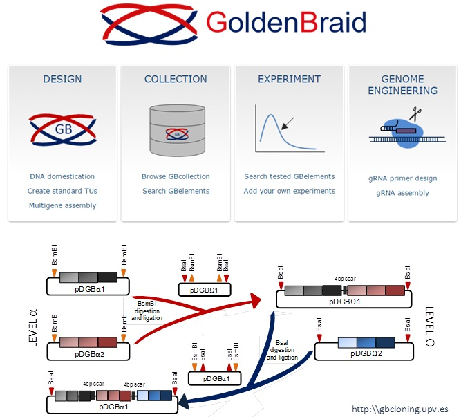 Orzaez Lab flowchart of Golden Braid Kit