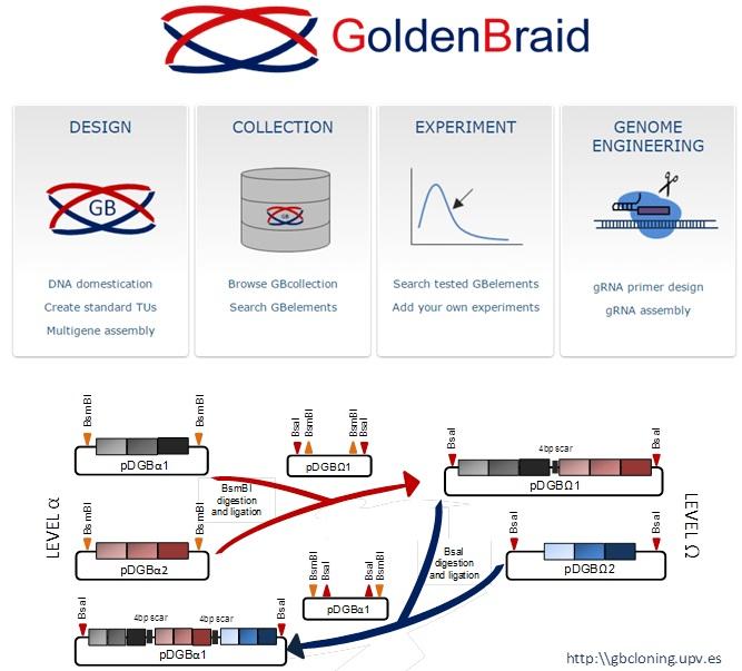 Orzaez Lab flowchart of Golden Braid Kit