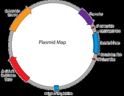 PlasmidMap.png