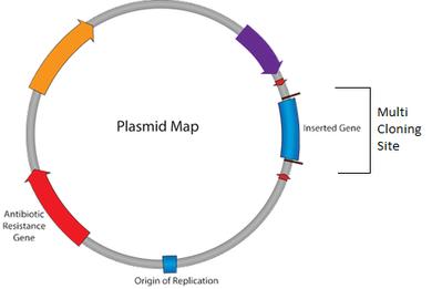 plasmid map cartoon