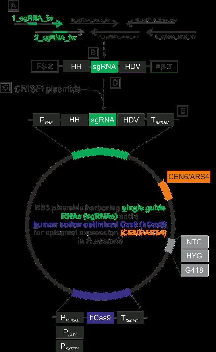 CRISPi-Figure 2.png