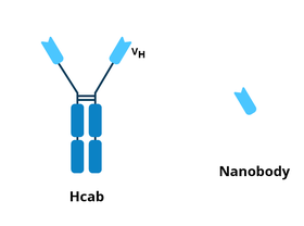 Hcab and nanobody schematics