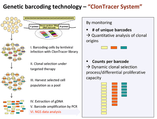 Diagram of how clontracer library works