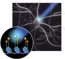 LITE-optogenetics-genome-editing-Feng-Zhang.png
