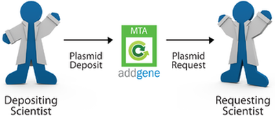 overview of Addgene plasmid process